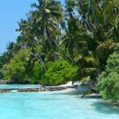 Voyager aux Maldives pour découvrir la mer d'étoiles