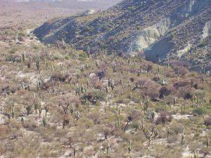 Argentine - parc national Los Cardones