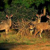 Le Zimbabwe, un pays qui gagne à être visité