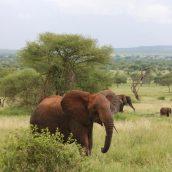 La Tanzanie : une des meilleures destinations safari d'Afrique
