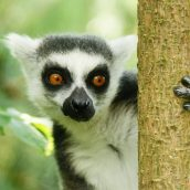 Madagascar, une destination de vacances par excellence
