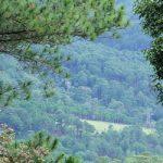 Langbiang_Peak