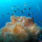 plongée sous-marin mer
