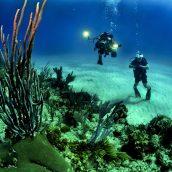 L'univers sous-marin de La Réunion