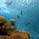 poissons sous l'eau de plongée l'eau
