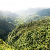 Des vacances vertes à l'Ile Maurice