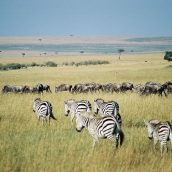 Top 3 des activités à faire au Kenya