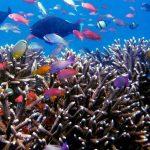 poissons tropicaux plongée sous marine poissons