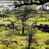 La Tanzanie, une destination qui plaira aux naturalistes en herbe
