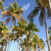 Les incontournables de la Guadeloupe