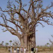 Voyager autrement: séjour solidaire au Sénégal