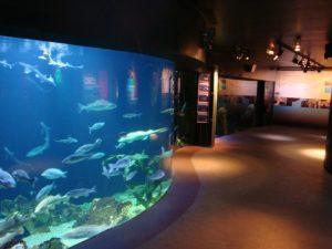 Musée de l'Aquarium à Arcachon en France