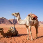 La Jordanie, les sites de randonnées immanquables