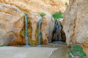 L'oasis de Tozeur en Tunisie