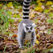Pourquoi passer par une agence de voyage à Madagascar?