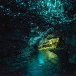 Image dans les grottes Waitomo