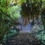 Le pont naturel de Mangapohue ou le Mangapohue Natural Bridge Walk