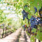 Route des vins Californie