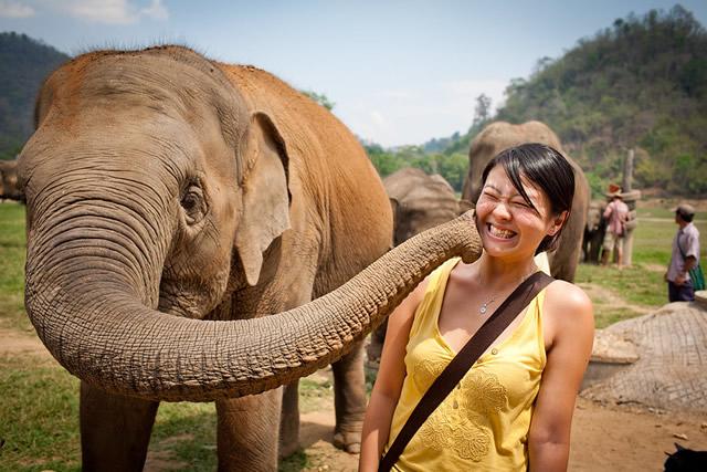 Se divertir en compagnie des éléphants