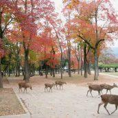 Nara, la capitale antique japonaise à ne pas manquer