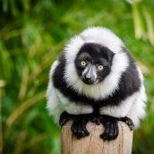 Le tourisme, un avenir sûr pour Madagascar