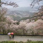 Nara au Japon paysage