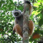 Parc national Andasibe Mantadia Madagascar