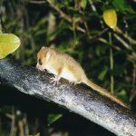 Parc national Ranomafana Madagascar