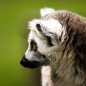 Voyage écotouristique à Madagascar: 3 sites naturels à visiter absolument