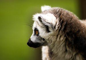 Parc national de Madagascar