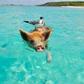 Guide de voyage aux Bahamas: 3 endroits à ne pas louper sous aucun prétexte