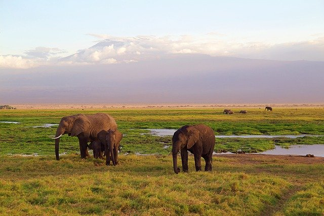 Ecotourisme Kenya