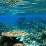 Snorkeling Fidji