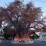 Majunga Baobab Madagascar