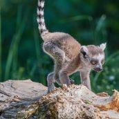 Comment bien planifier votre voyage à Madagascar?